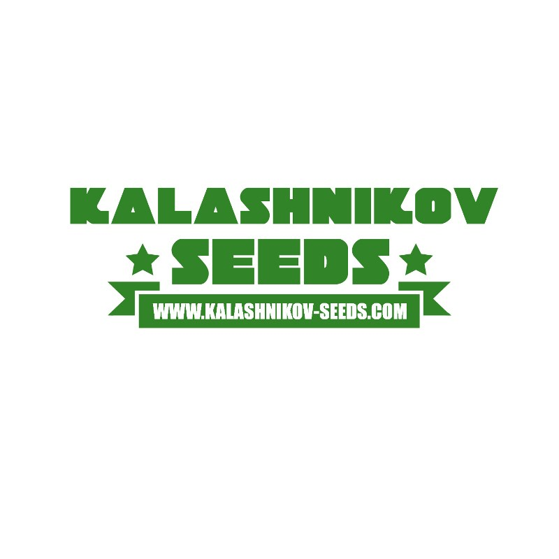 Kalashnikov Seeds Purple Mazar Auto 5ks
