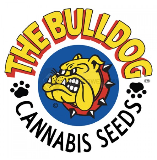 Bulldog Seeds White Widow regular 5ks