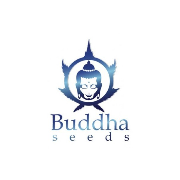 Buddha Seeds White Dwarf Regular 10ks