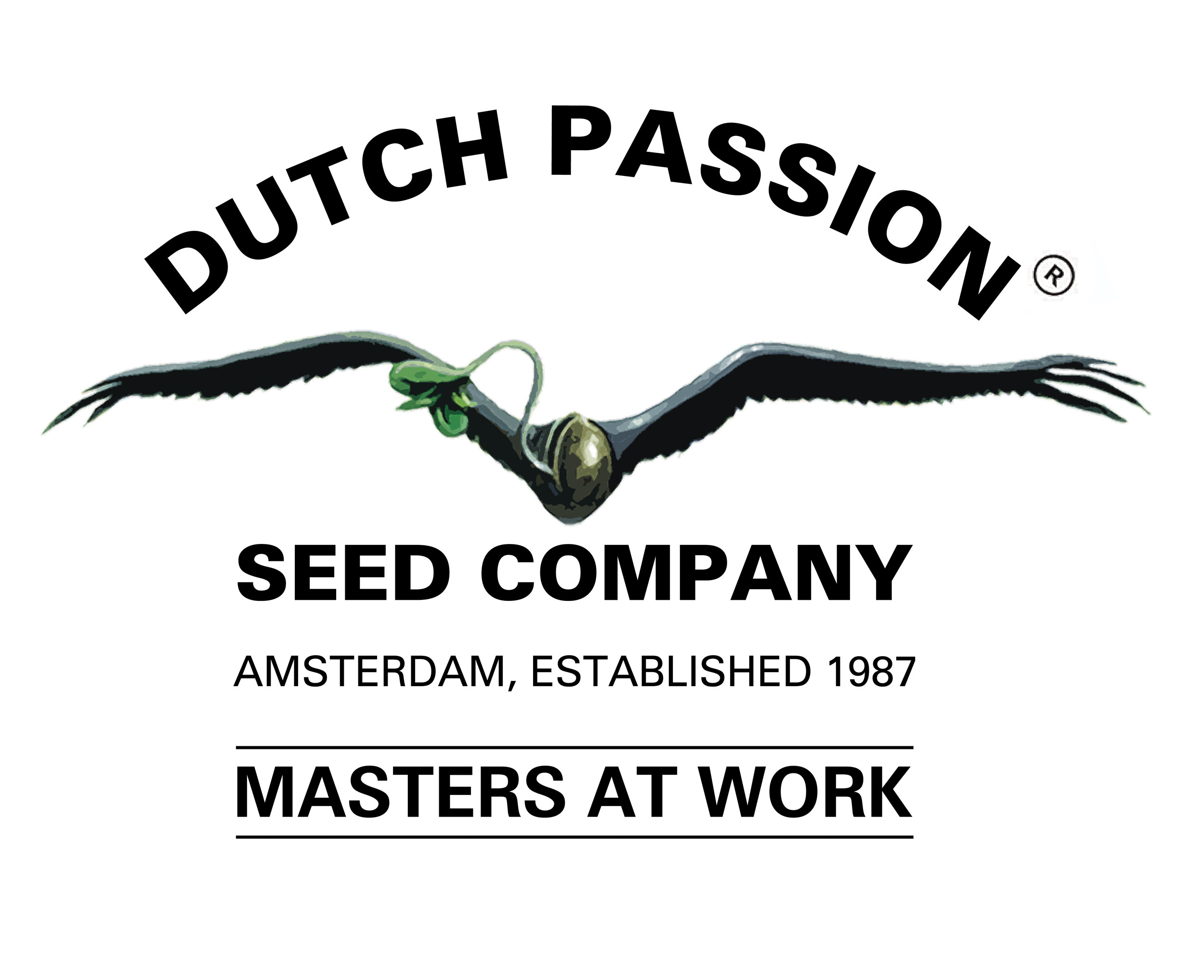 Dutch Passion Power Plant 10ks Regular